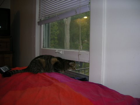 tom-in-the-window.JPG